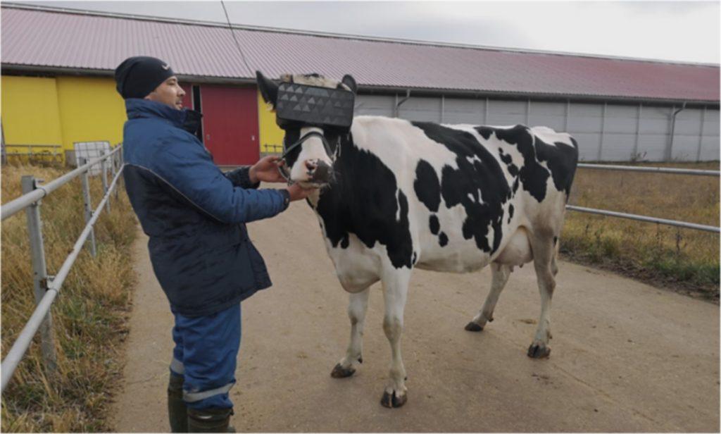vache casque Vr