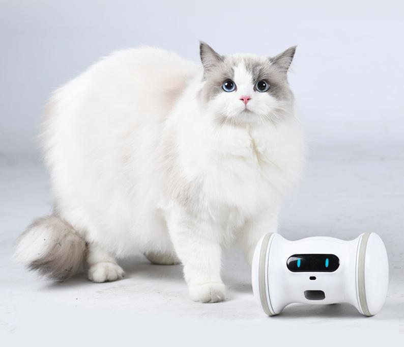 Robot et chat.png