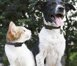 CES 2020 : Le Pet Tracker d'Invoxia permet aussi de connaître l'état de santé de votre animal