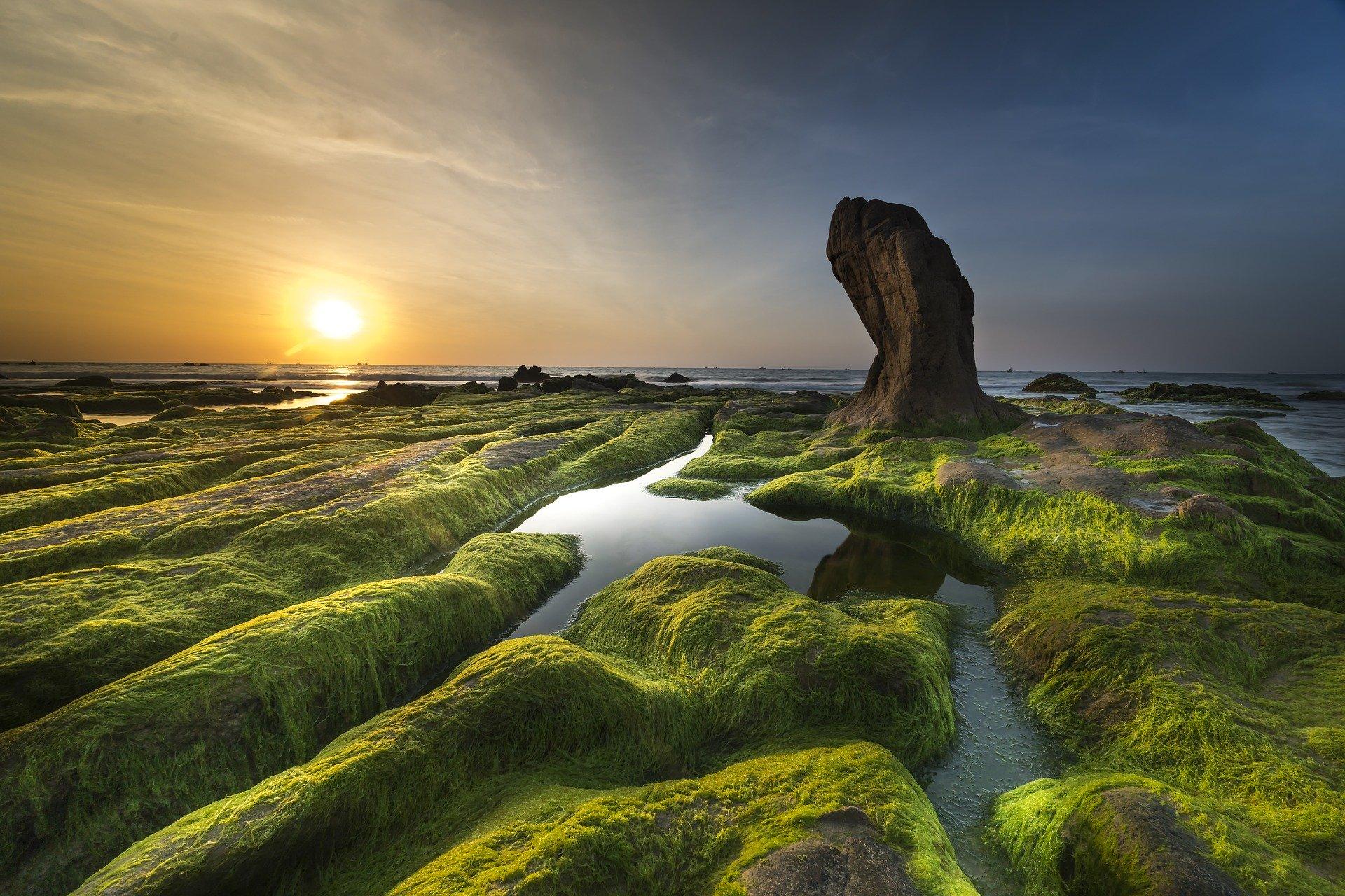 Vers une exploitation industrielle des algues vertes?