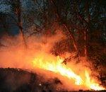 Les incendies australiens ont émis autant de CO2 que les 100 pays les moins pollueurs