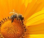 L'ONU prépare un texte visant à protéger un tiers de la biodiversité mondiale