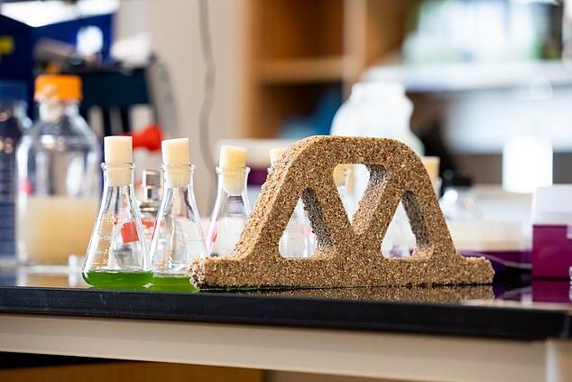 matériau construction bactéries