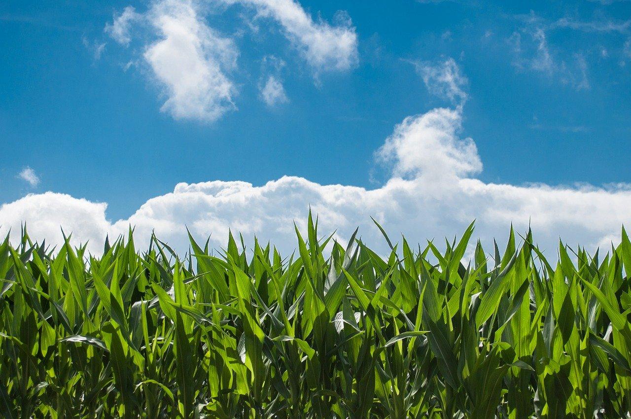 Le département américain de l'agriculture vise 30% de biocarburant d'ici 2050