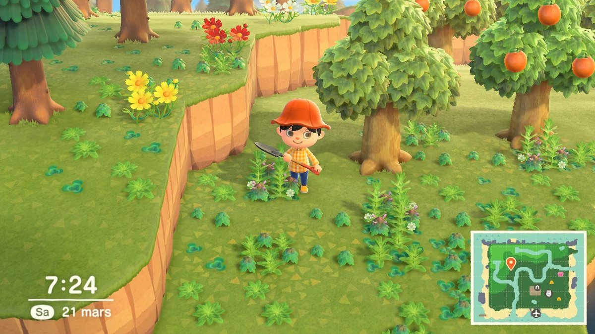 Animal Crossing New Horizons Test