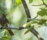 Démonstration de la transmission de microplastiques des insectes aux oiseaux