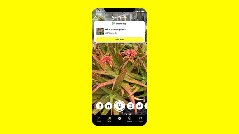 Snapchat plante © Snapchat