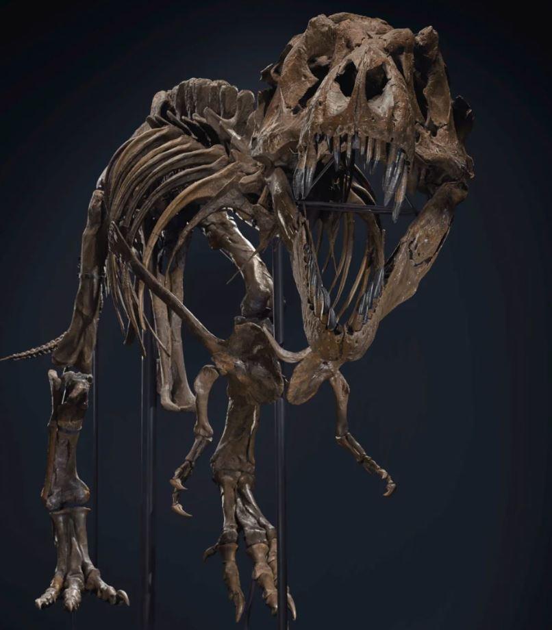 T-Rex / enchères © Christie's