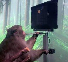 Un singe peut jouer à Pong par la pensée grâce à un Neuralink implanté dans son cerveau