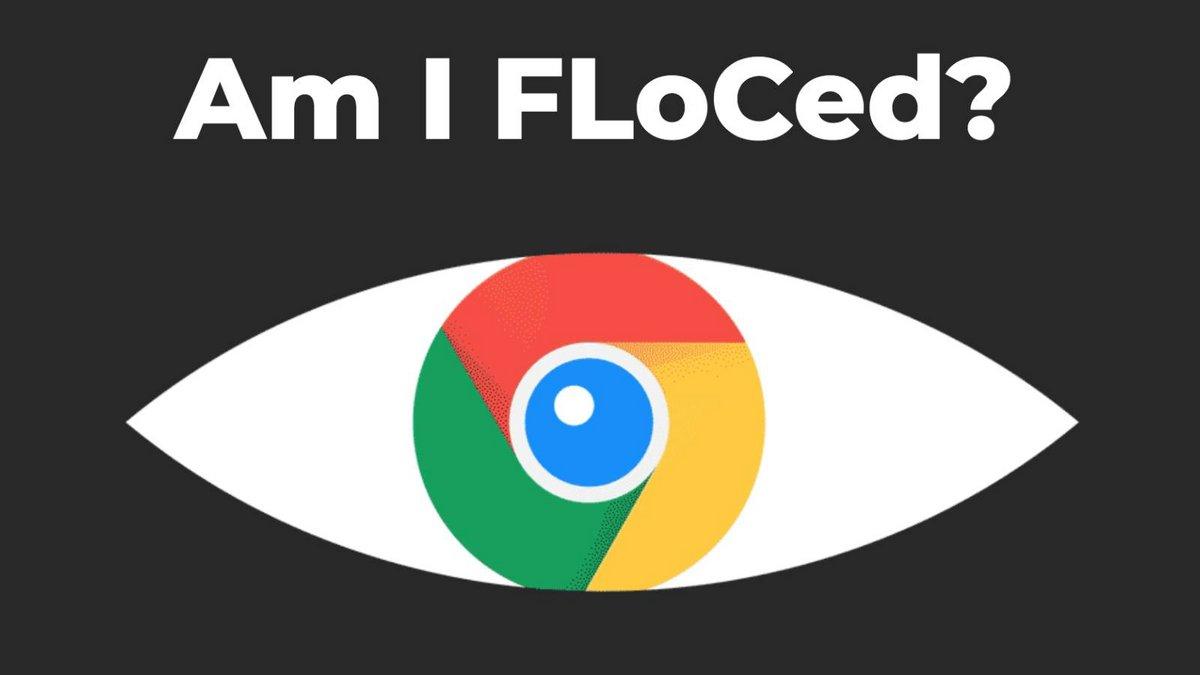 Am I FloCed © Capture d'écran