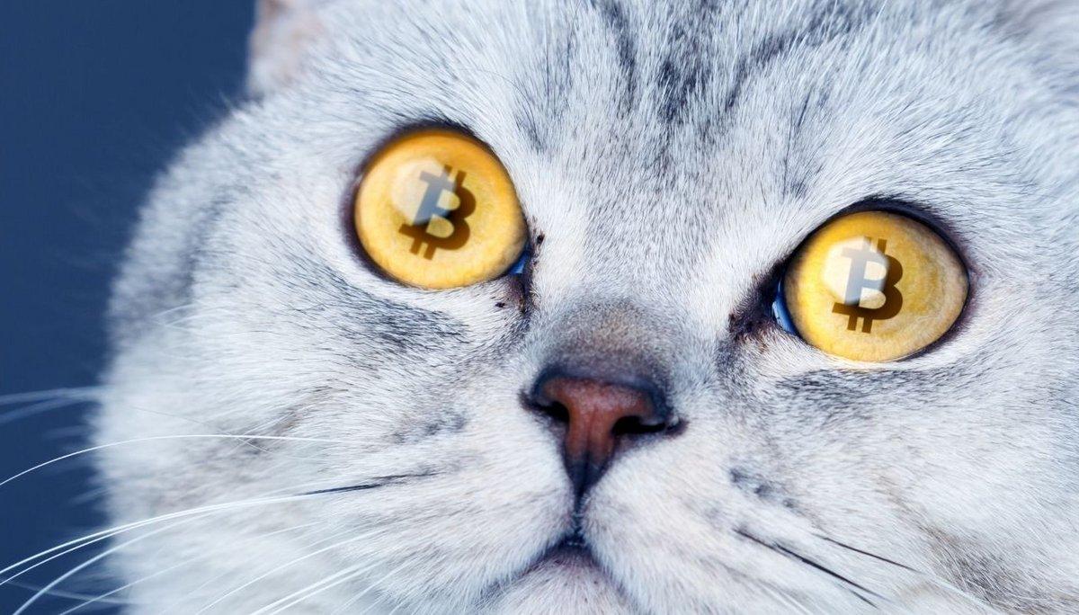 CAT Crypto-monnaie