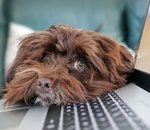 Royal Canin : une entreprise tournée vers le digital et la personnalisation, au service des animaux (Interview)