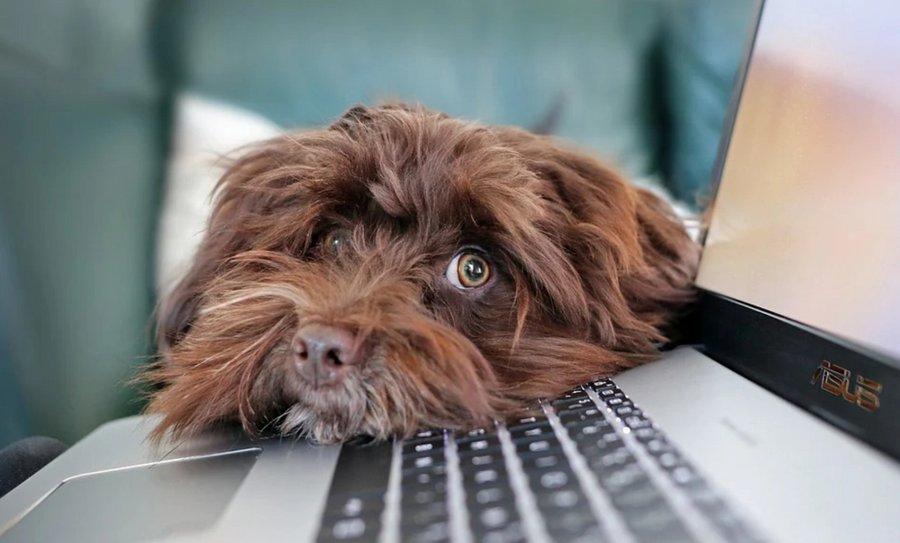 Grâce aux algorithmes, à l'intelligence artificielle et plus largement au digital, Royal Canin propose de nouvelles solutions à ses clients et à leurs chiens et/ou chats, solutions davantage personnalisées. Au détour d'une interview, Clubic a vo